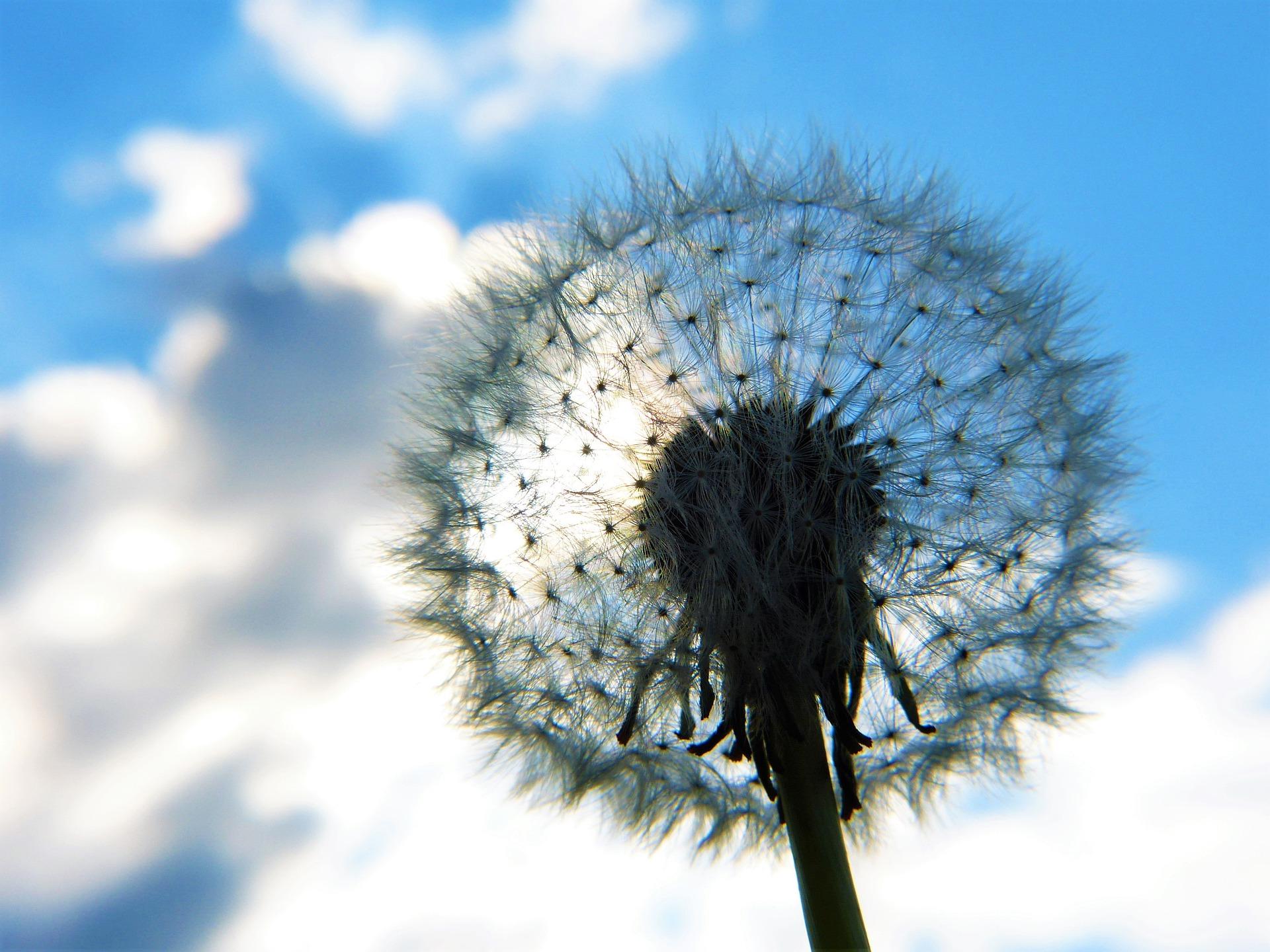 flor-cielo-calma-inself