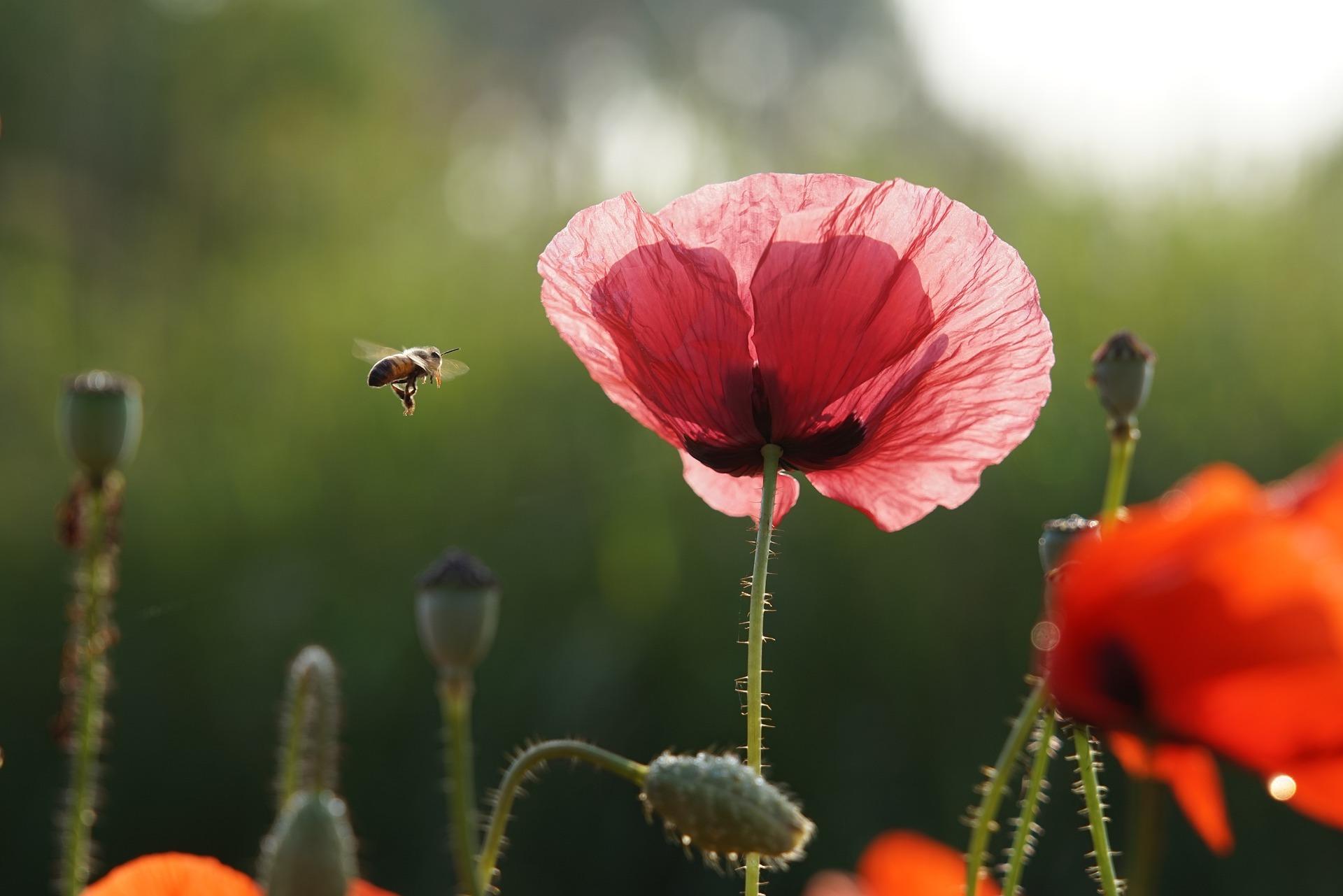 flor-roja-inself