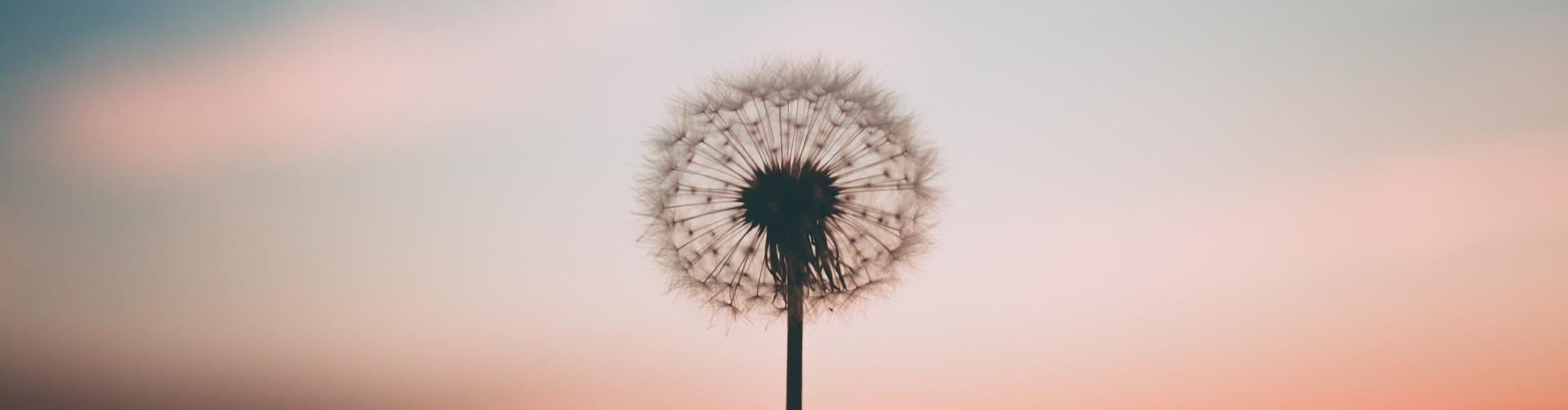 flor-atardecer-inself